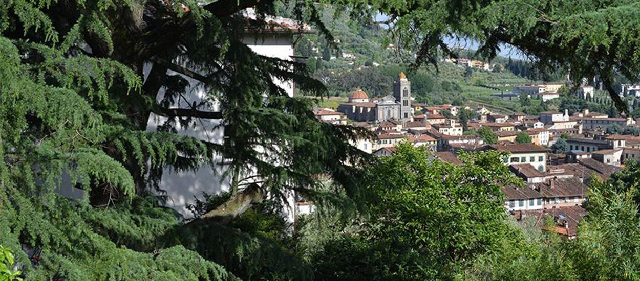 Azienda Agricola San Domenico